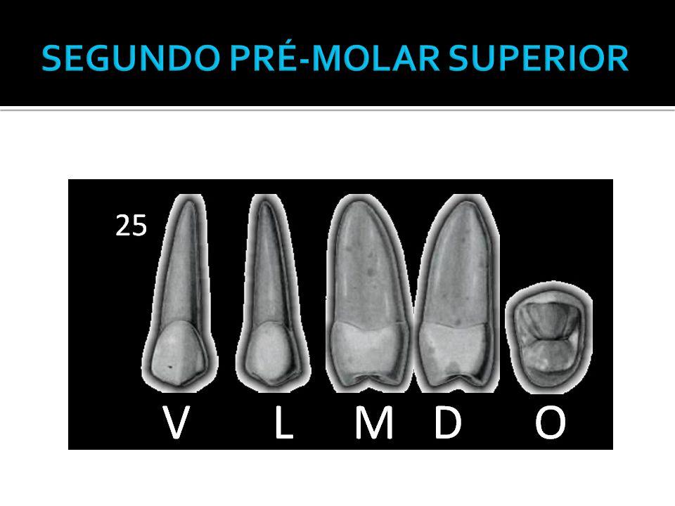  Perfis idênticos ao do primeiro pré-molar superior.