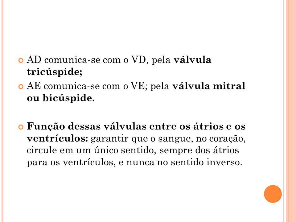 AD comunica-se com o VD, pela válvula tricúspide; AE comunica-se com o VE; pela válvula mitral ou bicúspide.