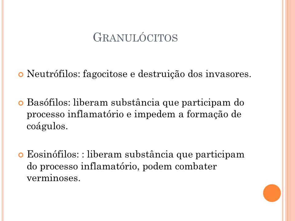 G RANULÓCITOS Neutrófilos: fagocitose e destruição dos invasores.