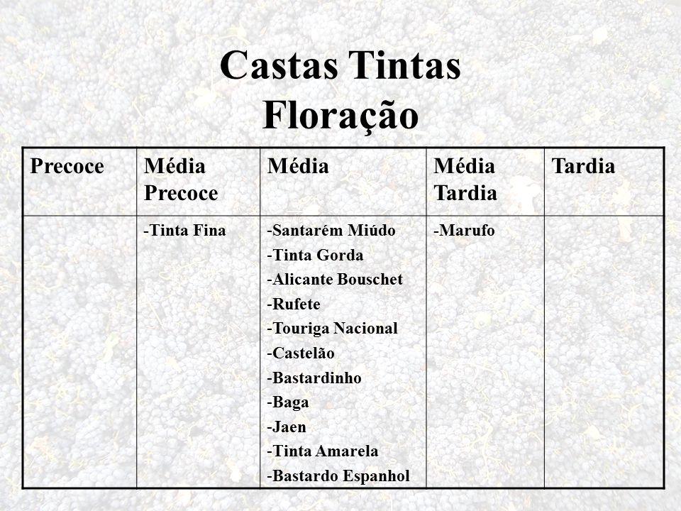 Castas Tintas Floração PrecoceMédia Precoce MédiaMédia Tardia Tardia -Tinta Fina-Santarém Miúdo -Tinta Gorda -Alicante Bouschet -Rufete -Touriga Nacio