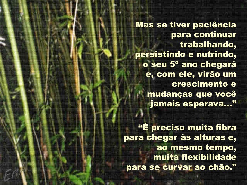 Um escritor de nome Covey escreveu: Muitas coisas na vida pessoal e profissional são iguais ao bambu chinês.