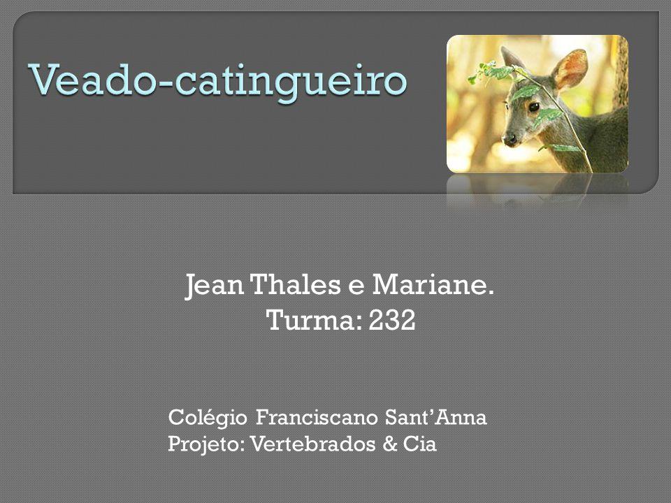 Jean Thales e Mariane. Turma: 232 Colégio Franciscano Sant'Anna Projeto: Vertebrados & Cia