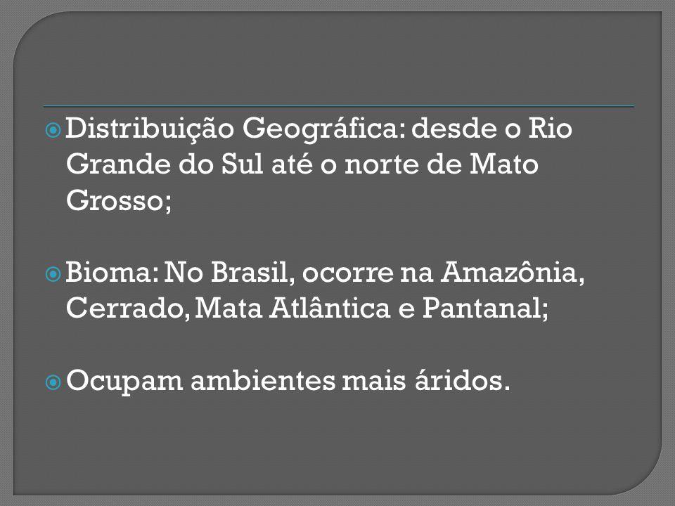  Distribuição Geográfica: desde o Rio Grande do Sul até o norte de Mato Grosso;  Bioma: No Brasil, ocorre na Amazônia, Cerrado, Mata Atlântica e Pantanal;  Ocupam ambientes mais áridos.