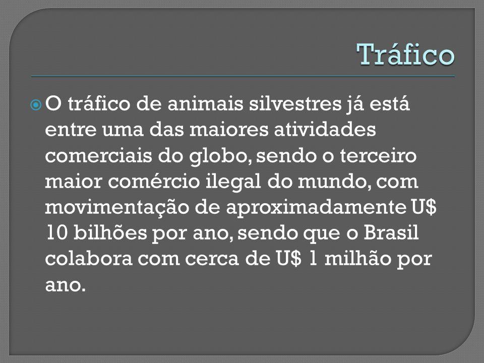  O tráfico de animais silvestres já está entre uma das maiores atividades comerciais do globo, sendo o terceiro maior comércio ilegal do mundo, com movimentação de aproximadamente U$ 10 bilhões por ano, sendo que o Brasil colabora com cerca de U$ 1 milhão por ano.