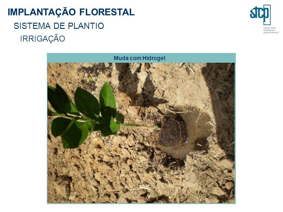 IMPLANTAÇÃO FLORESTAL SISTEMA DE PLANTIO IRRIGAÇÃO Muda com Hidrogel