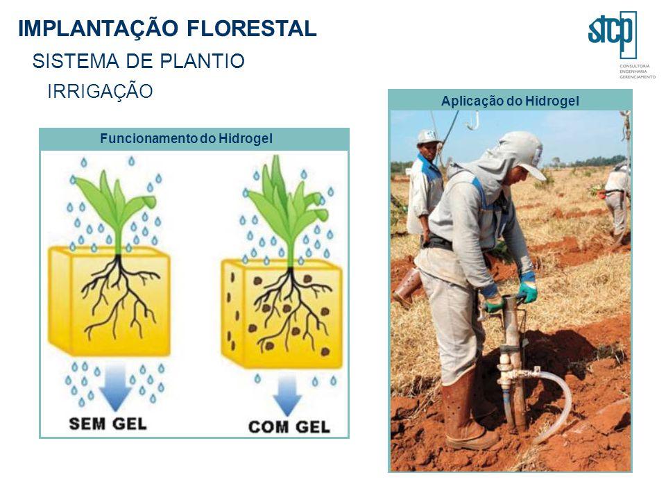 IMPLANTAÇÃO FLORESTAL SISTEMA DE PLANTIO IRRIGAÇÃO Funcionamento do Hidrogel Aplicação do Hidrogel