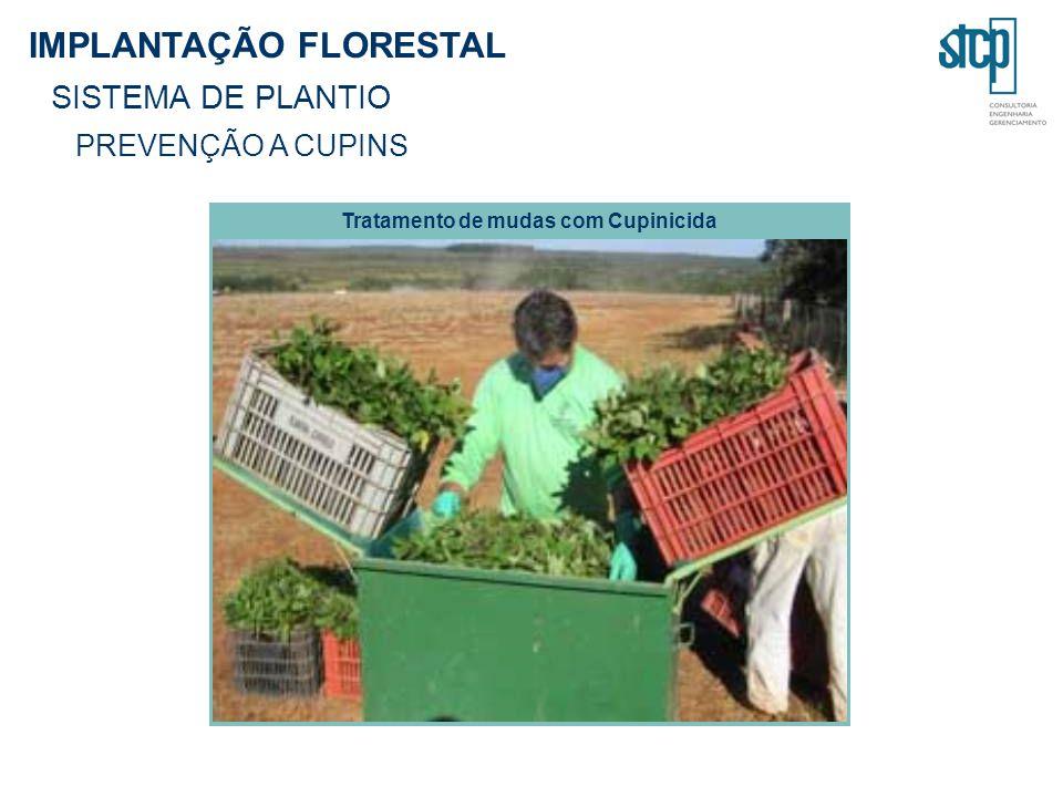 IMPLANTAÇÃO FLORESTAL SISTEMA DE PLANTIO PREVENÇÃO A CUPINS Tratamento de mudas com Cupinicida