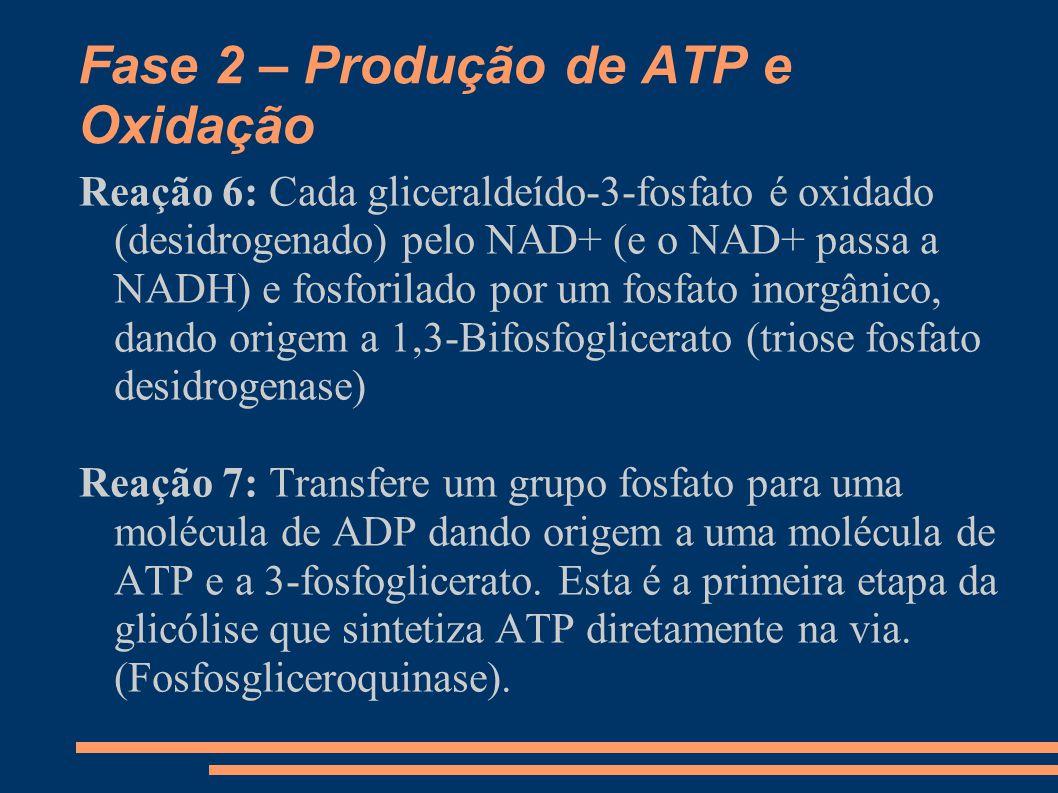 Fase 2 – Produção de ATP e Oxidação Reação 6: Cada gliceraldeído-3-fosfato é oxidado (desidrogenado) pelo NAD+ (e o NAD+ passa a NADH) e fosforilado p