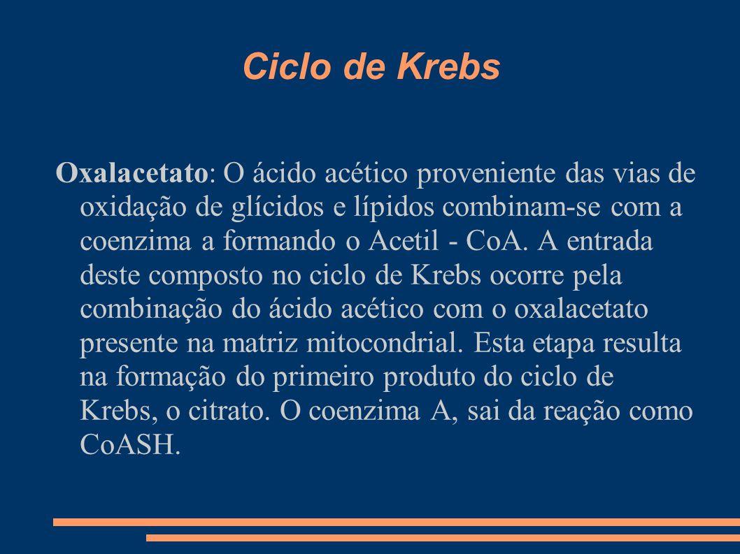 Ciclo de Krebs Oxalacetato: O ácido acético proveniente das vias de oxidação de glícidos e lípidos combinam-se com a coenzima a formando o Acetil - Co