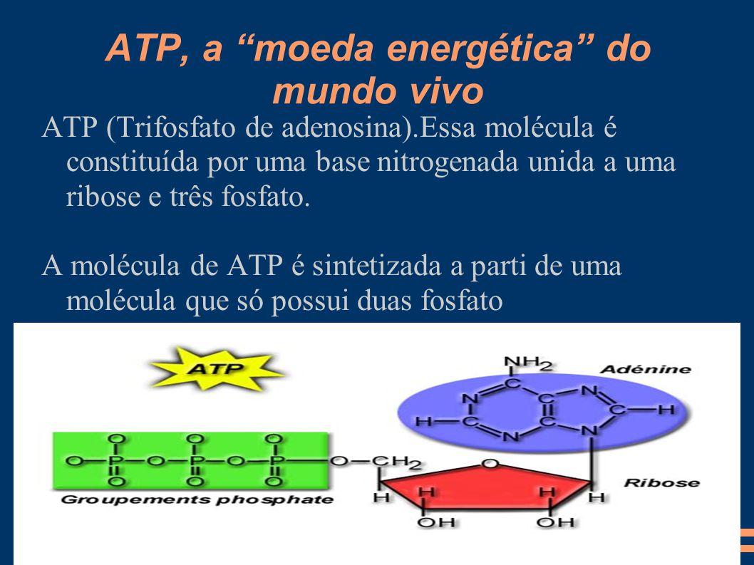 """ATP, a """"moeda energética"""" do mundo vivo ATP (Trifosfato de adenosina).Essa molécula é constituída por uma base nitrogenada unida a uma ribose e três f"""