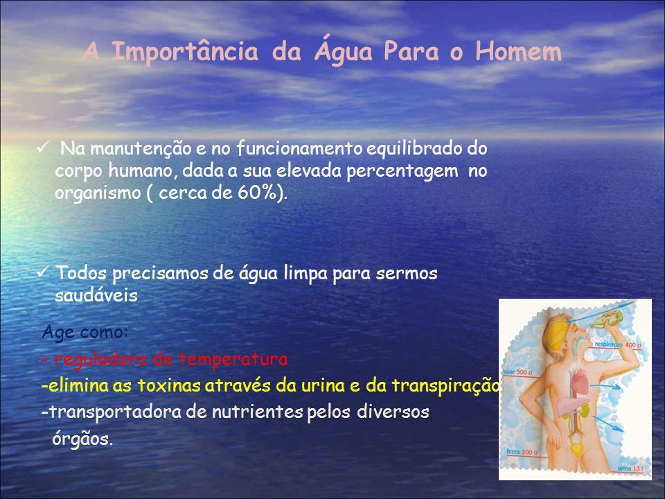 A Importância da Água Para o Homem Na manutenção e no funcionamento equilibrado do corpo humano, dada a sua elevada percentagem no organismo ( cerca d