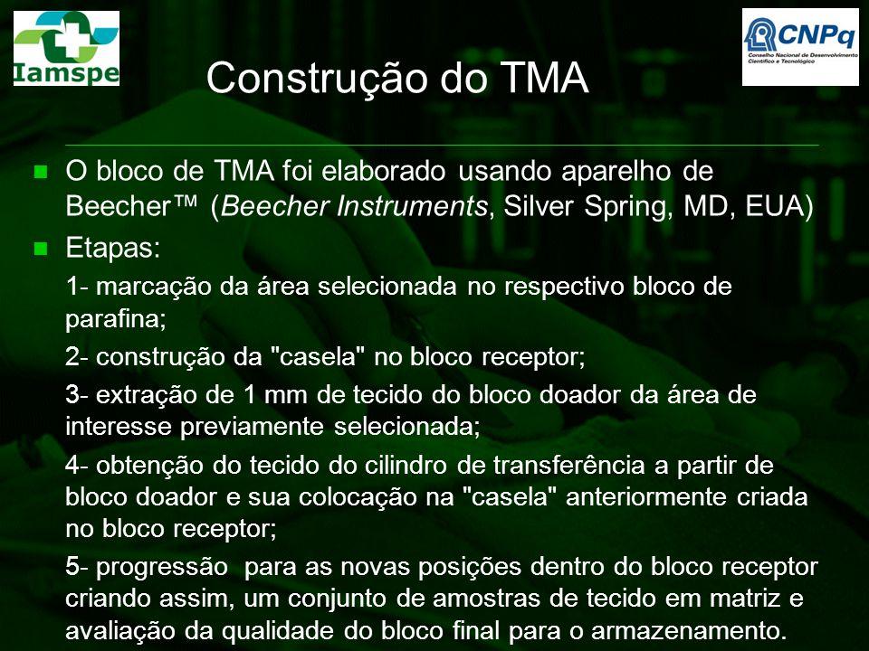 Construção do TMA O bloco de TMA foi elaborado usando aparelho de Beecher™ (Beecher Instruments, Silver Spring, MD, EUA) Etapas: 1- marcação da área s