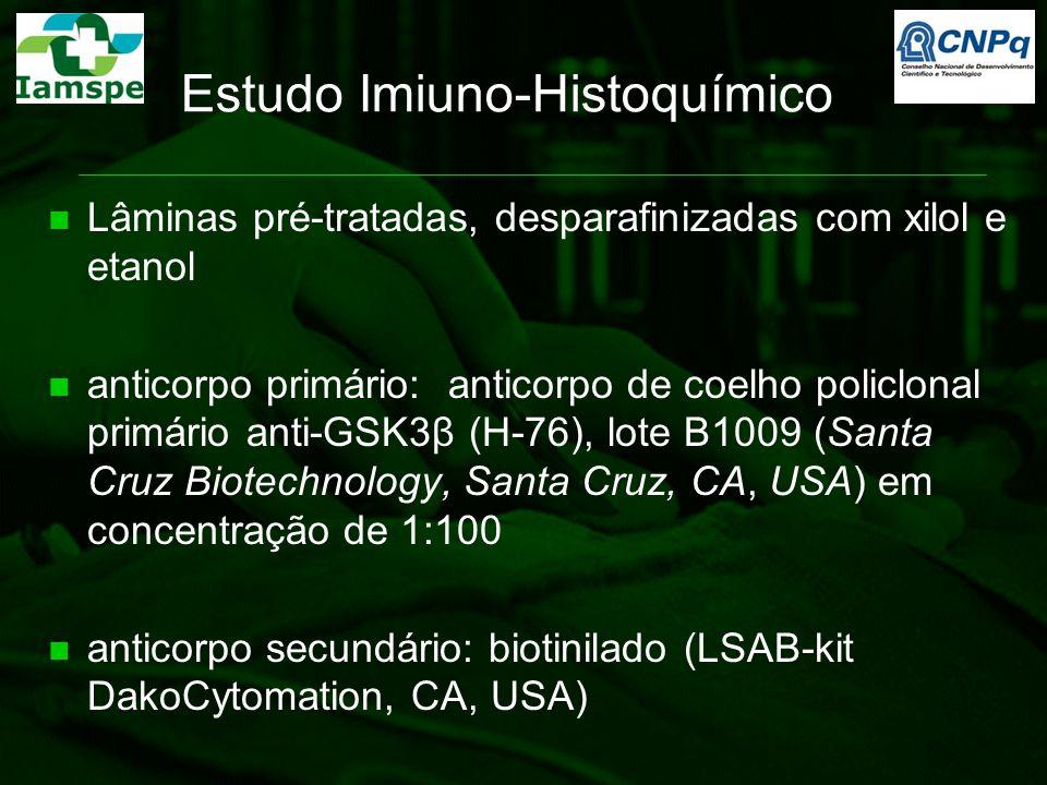 Estudo Imiuno-Histoquímico Lâminas pré-tratadas, desparafinizadas com xilol e etanol anticorpo primário: anticorpo de coelho policlonal primário anti-