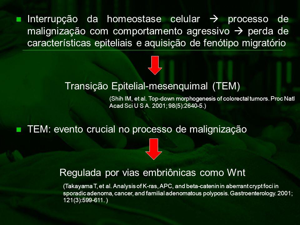 Interrupção da homeostase celular  processo de malignização com comportamento agressivo  perda de características epiteliais e aquisição de fenótipo
