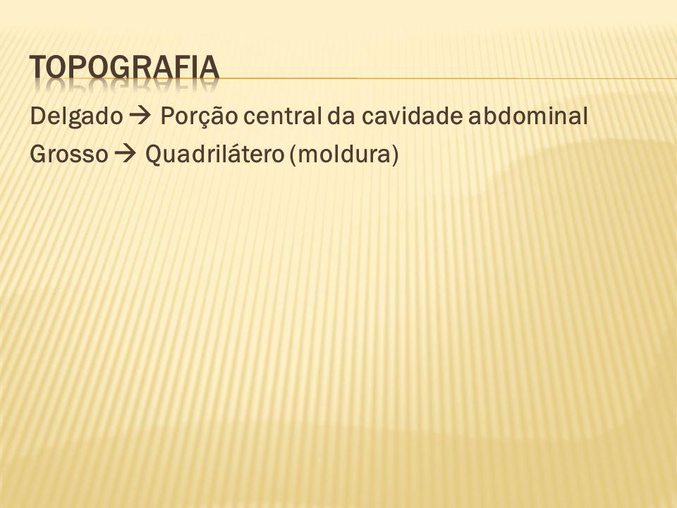 Delgado  Porção central da cavidade abdominal Grosso  Quadrilátero (moldura)