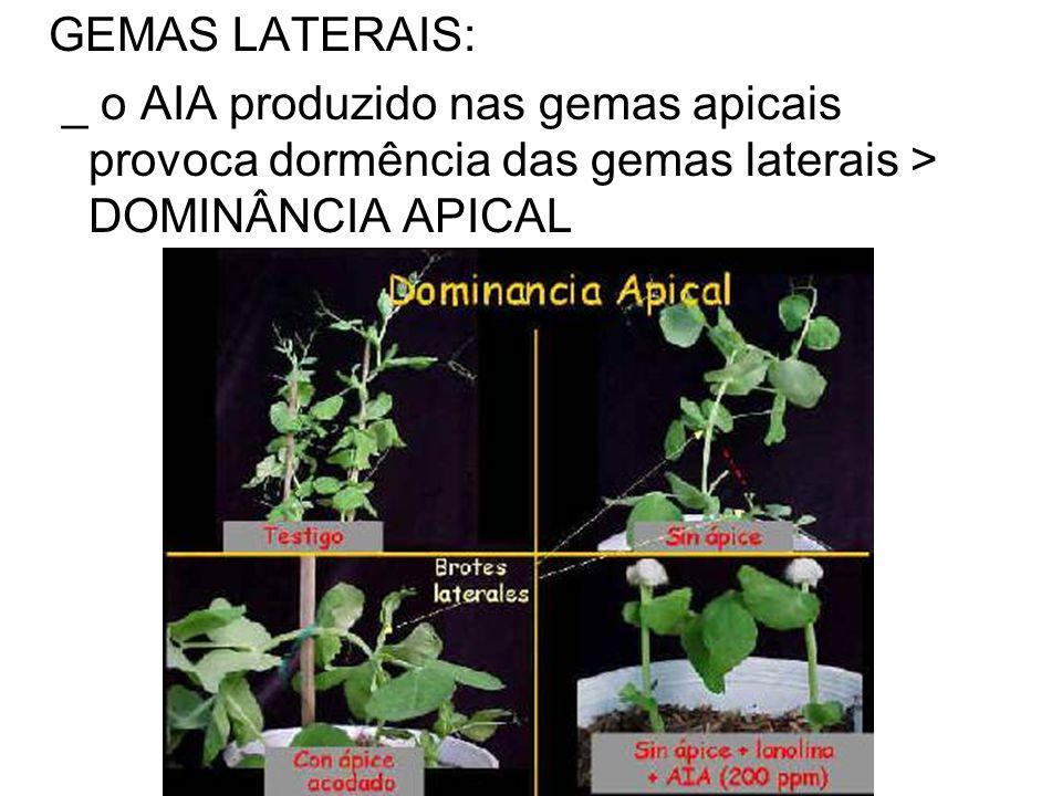 GEMAS LATERAIS: _ o AIA produzido nas gemas apicais provoca dormência das gemas laterais > DOMINÂNCIA APICAL