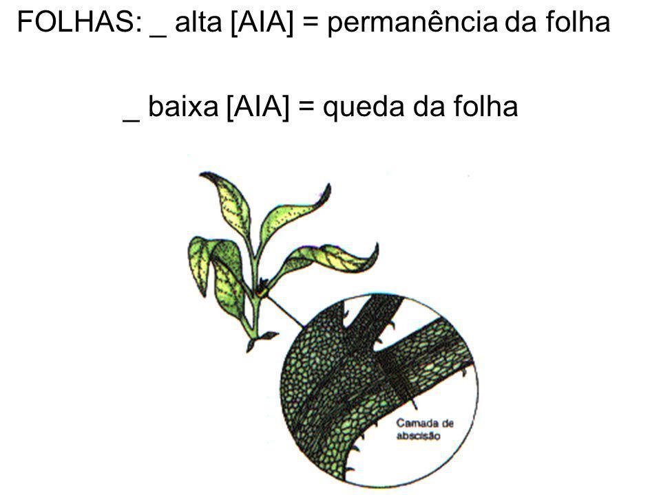 FOLHAS: _ alta [AIA] = permanência da folha _ baixa [AIA] = queda da folha