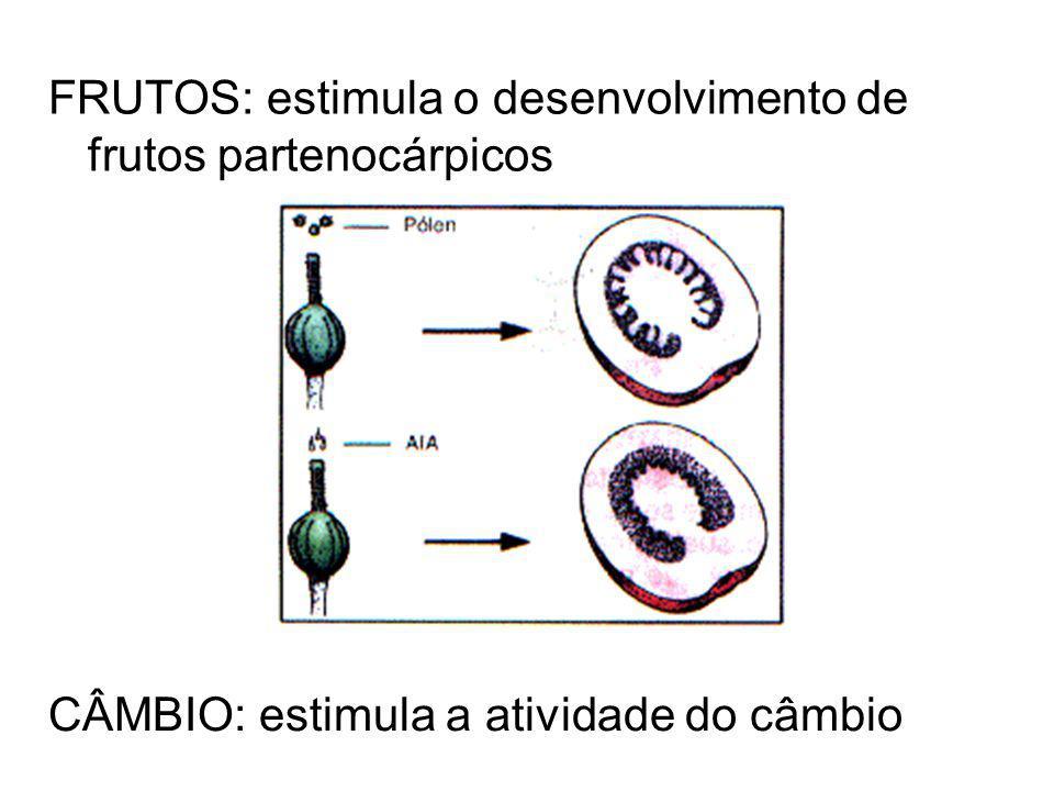 CÂMBIO: estimula a atividade do câmbio FRUTOS: estimula o desenvolvimento de frutos partenocárpicos