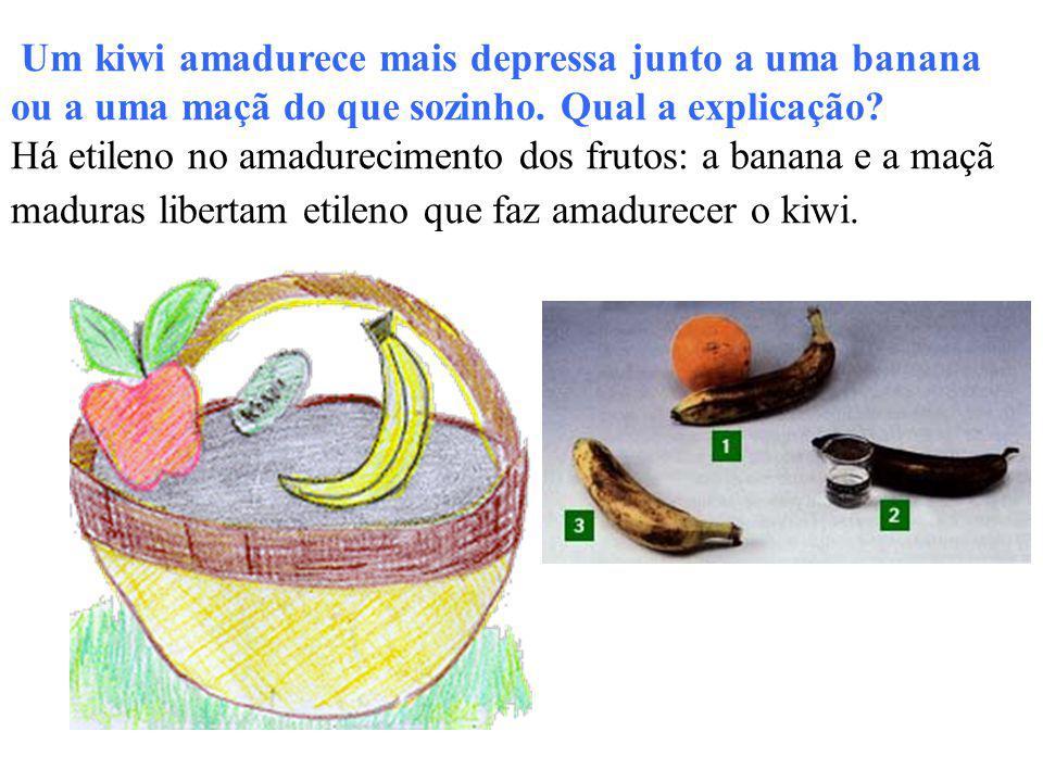 Um kiwi amadurece mais depressa junto a uma banana ou a uma maçã do que sozinho. Qual a explicação? Há etileno no amadurecimento dos frutos: a banana