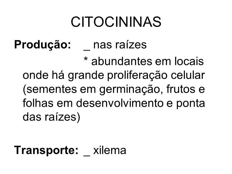 CITOCININAS Produção:_ nas raízes * abundantes em locais onde há grande proliferação celular (sementes em germinação, frutos e folhas em desenvolvimento e ponta das raízes) Transporte:_ xilema