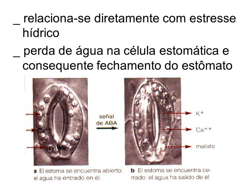 _ relaciona-se diretamente com estresse hídrico _ perda de água na célula estomática e consequente fechamento do estômato