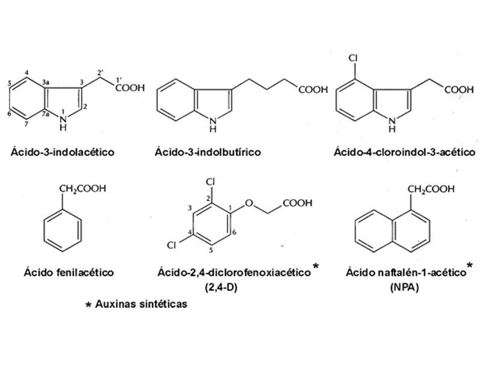 FOLHAS: _ regulam metabolismo _ retardam senescência FRUTOS E SEMENTES: estimulam a divisão celular