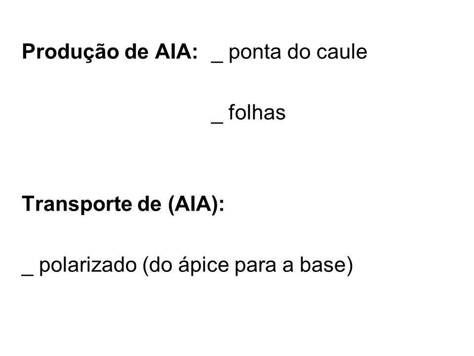 Produção de AIA:_ ponta do caule _ folhas Transporte de (AIA): _ polarizado (do ápice para a base)