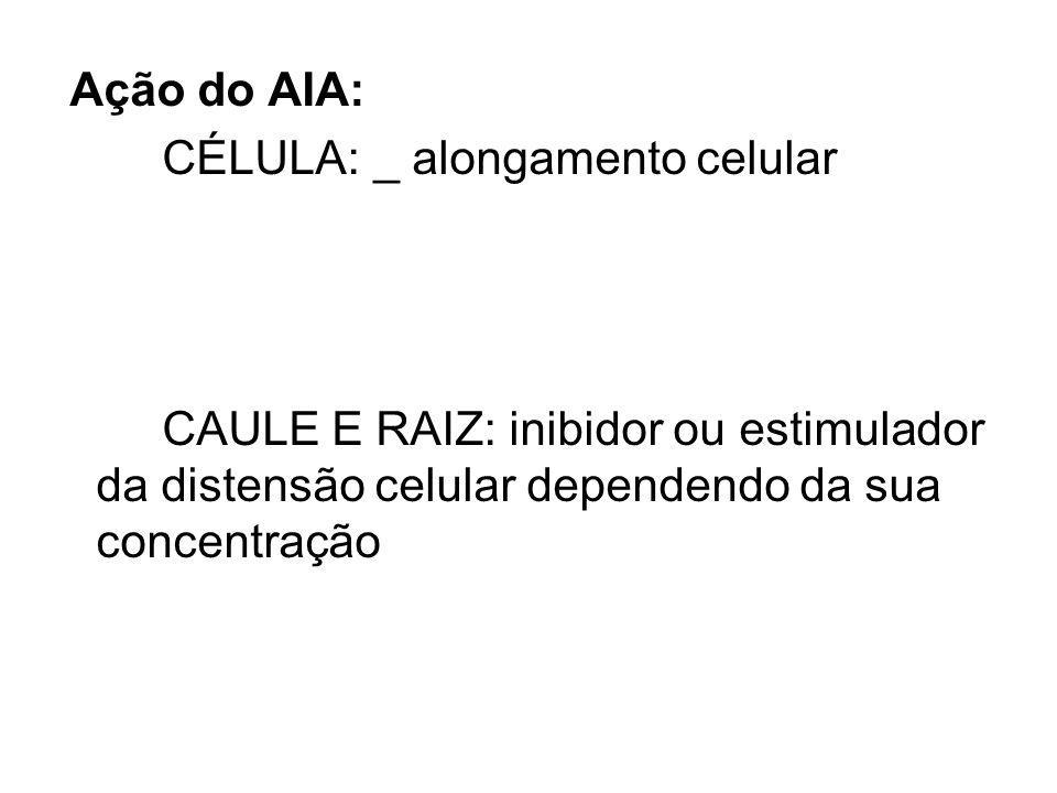 Ação do AIA: CÉLULA:_ alongamento celular CAULE E RAIZ: inibidor ou estimulador da distensão celular dependendo da sua concentração