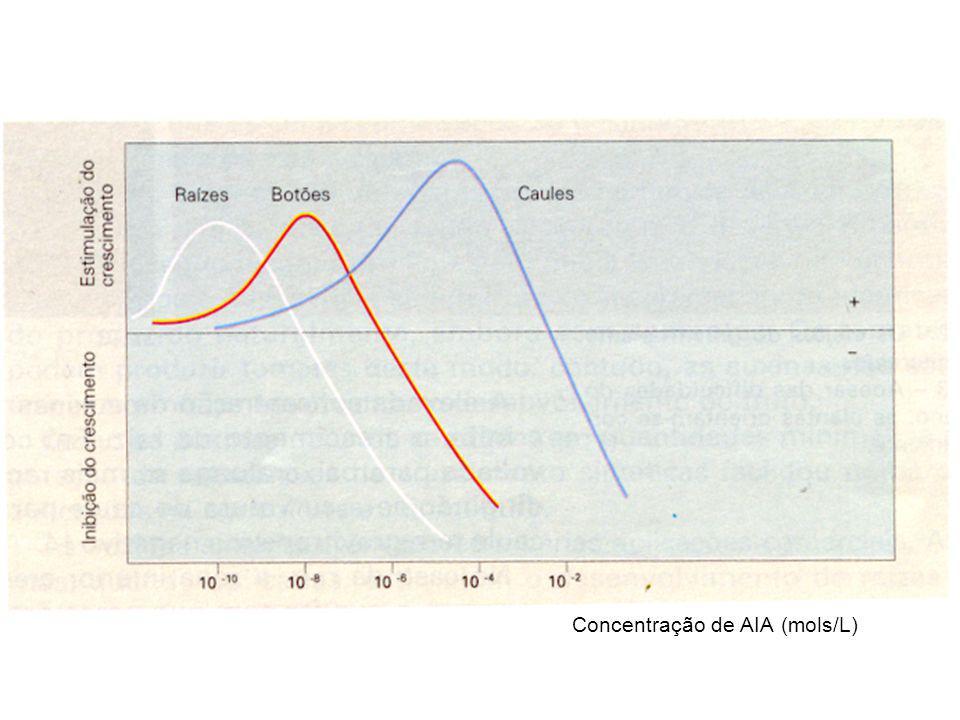 Flor d' oliveira SEMENTE:_ quebram o estado de dormência (importante na germinação) FLOR: _ induzem a floração