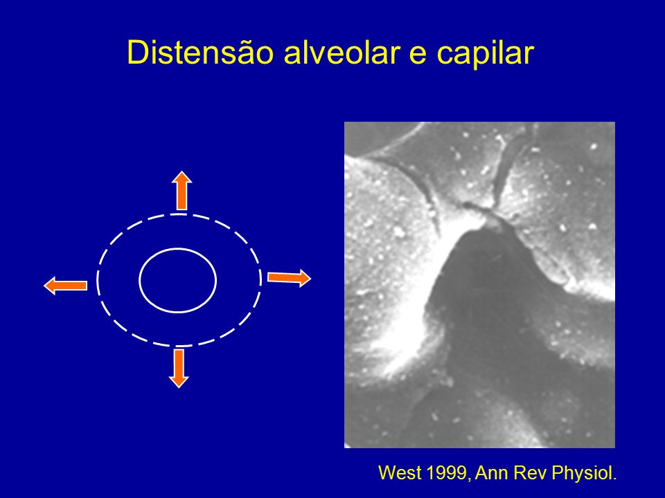 Distensão alveolar e capilar West 1999, Ann Rev Physiol.