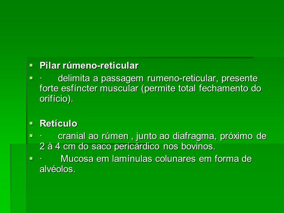  Pilar rúmeno-reticular  · delimita a passagem rumeno-reticular, presente forte esfíncter muscular (permite total fechamento do orifício).  Retícul