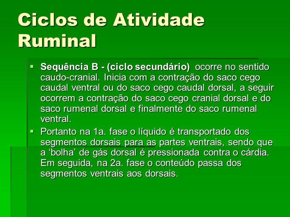 Ciclos de Atividade Ruminal  Sequência B - (ciclo secundário) ocorre no sentido caudo-cranial. Inicia com a contração do saco cego caudal ventral ou