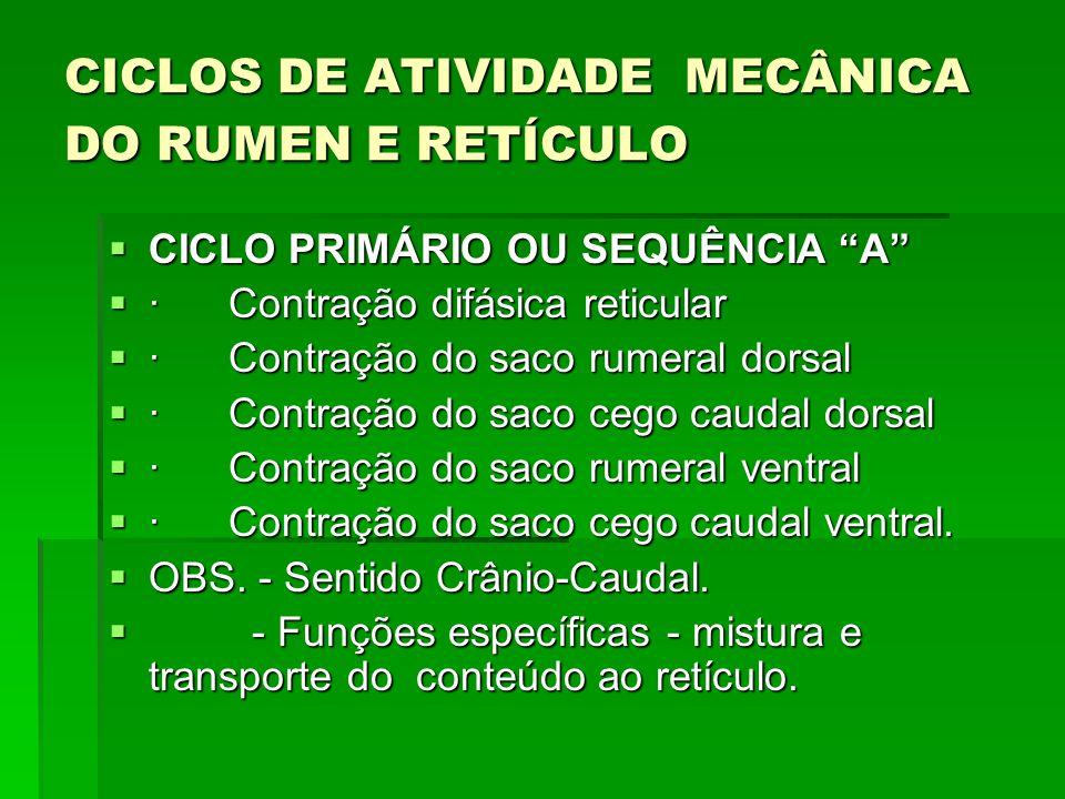 """CICLOS DE ATIVIDADE MECÂNICA DO RUMEN E RETÍCULO  CICLO PRIMÁRIO OU SEQUÊNCIA """"A""""  · Contração difásica reticular  · Contração do saco rumeral dors"""