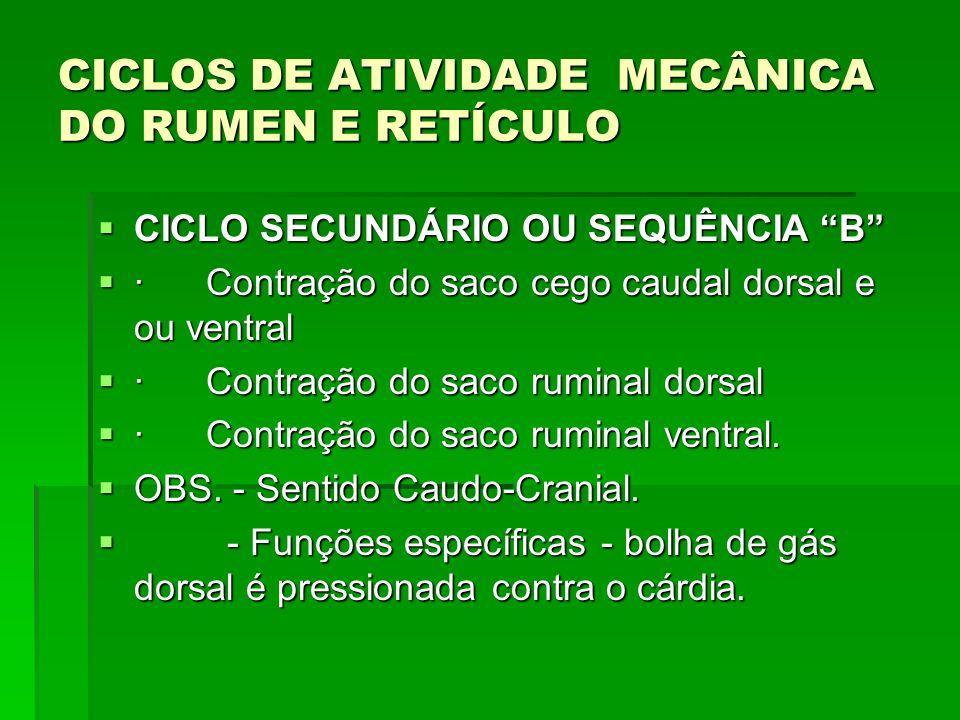 """CICLOS DE ATIVIDADE MECÂNICA DO RUMEN E RETÍCULO  CICLO SECUNDÁRIO OU SEQUÊNCIA """"B""""  · Contração do saco cego caudal dorsal e ou ventral  · Contraç"""