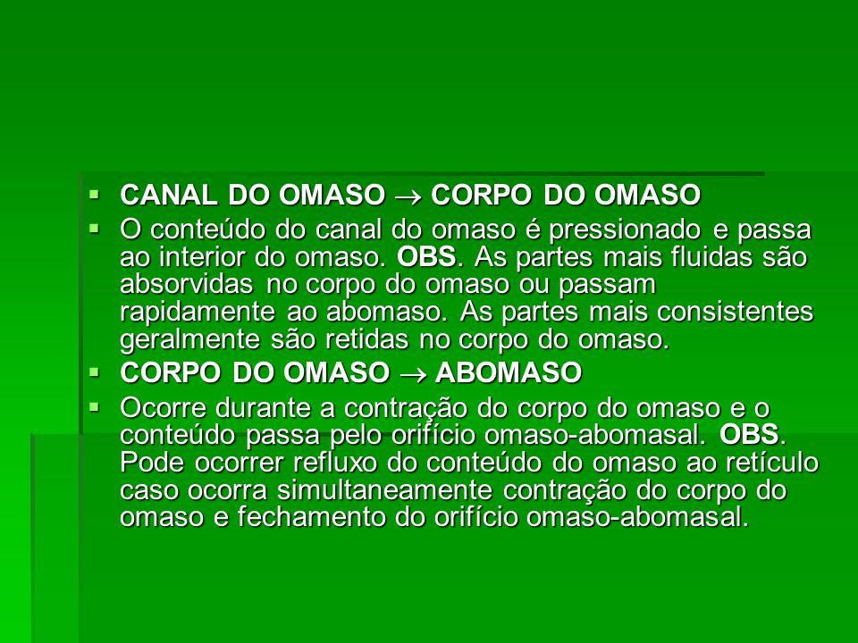  CANAL DO OMASO  CORPO DO OMASO  O conteúdo do canal do omaso é pressionado e passa ao interior do omaso. OBS. As partes mais fluidas são absorvida
