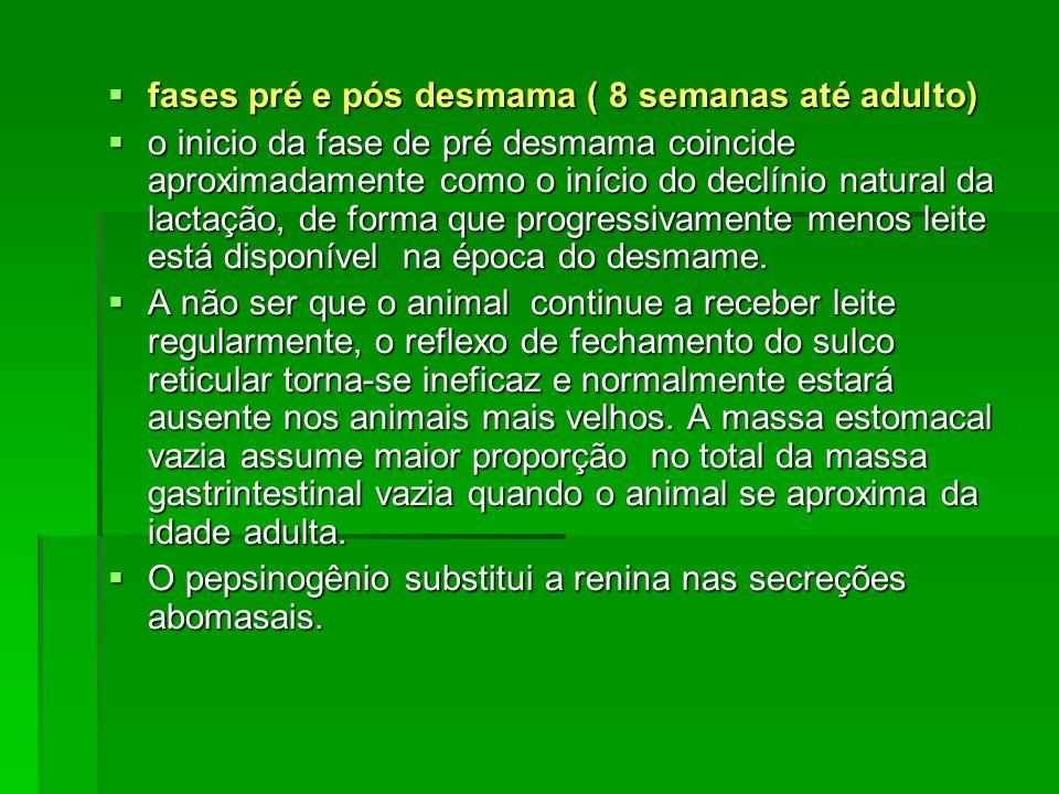  fases pré e pós desmama ( 8 semanas até adulto)  o inicio da fase de pré desmama coincide aproximadamente como o início do declínio natural da lact