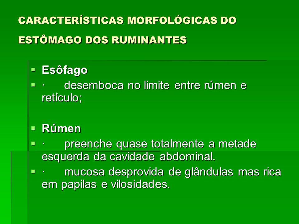  Pilar rúmeno-reticular  · delimita a passagem rumeno-reticular, presente forte esfíncter muscular (permite total fechamento do orifício).