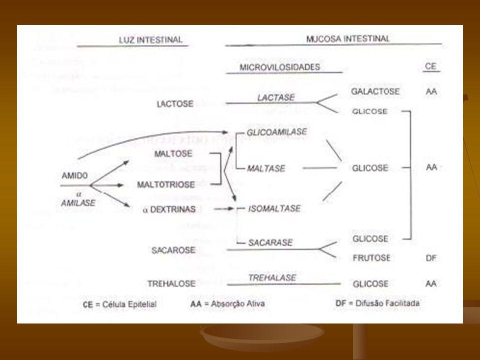 Patogenia A lactose, que é o principal carboidrato do leite é um dissacarídeo que contém galactose e glicose.