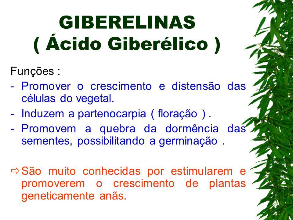 GIBERELINAS ( Ácido Giberélico ) Funções : -Promover o crescimento e distensão das células do vegetal. -Induzem a partenocarpia ( floração ). -Promove