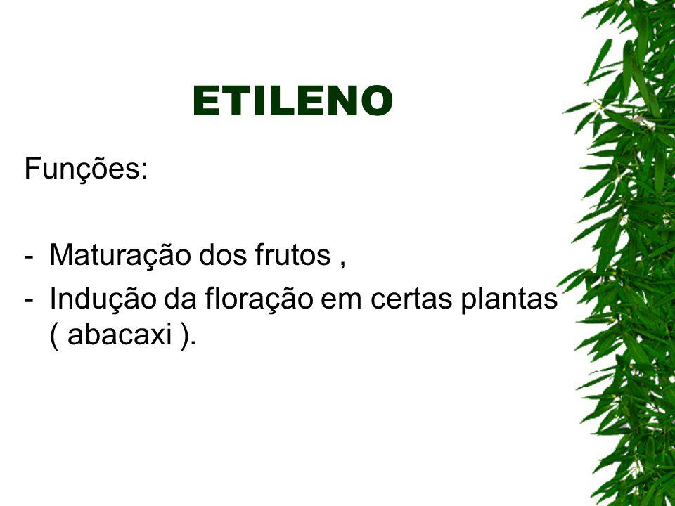 ETILENO Funções: -Maturação dos frutos, -Indução da floração em certas plantas ( abacaxi ).