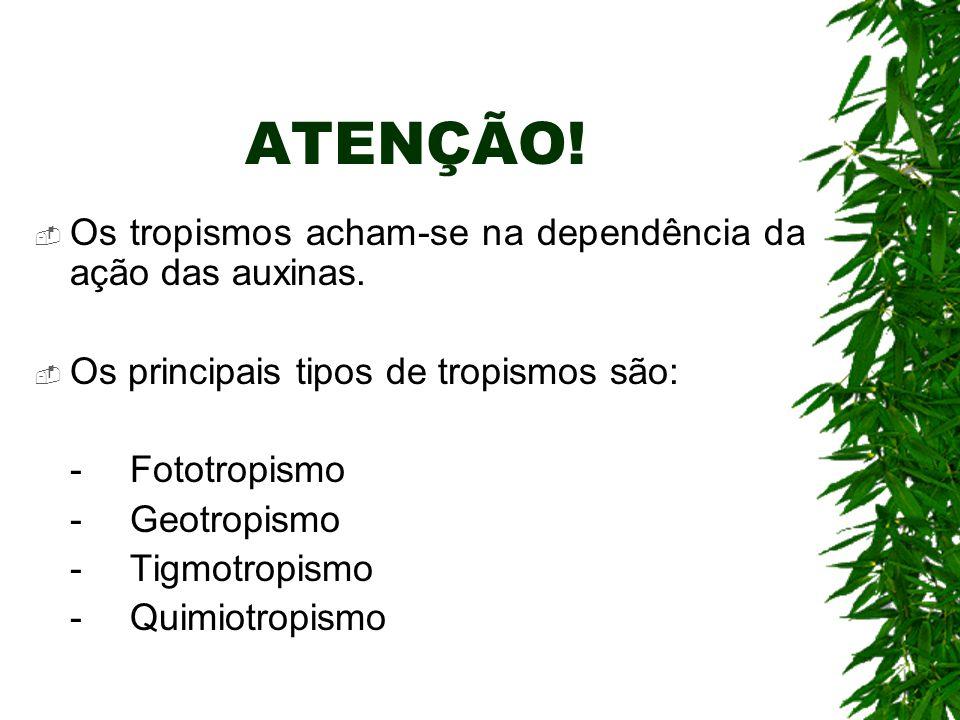 ATENÇÃO. Os tropismos acham-se na dependência da ação das auxinas.