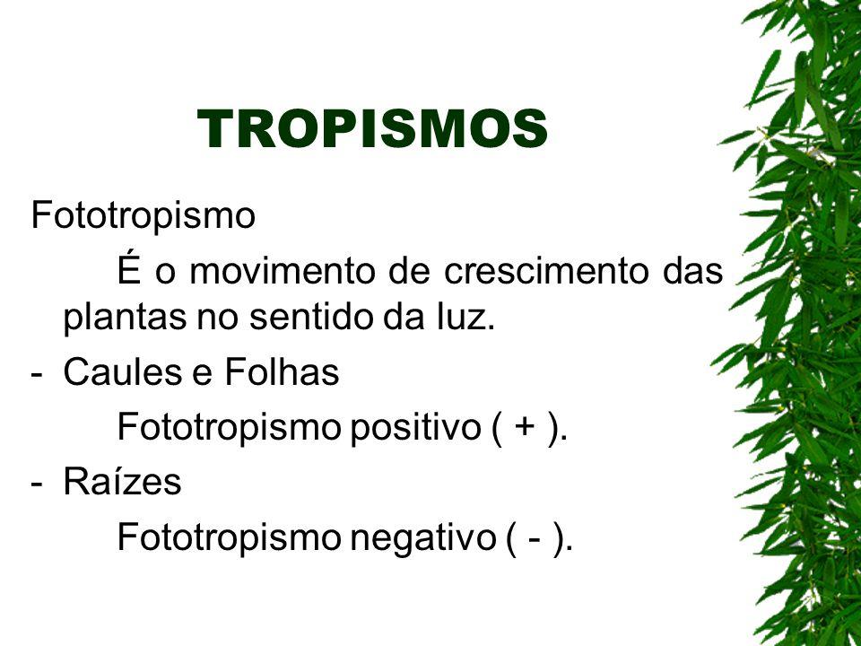 TROPISMOS Fototropismo É o movimento de crescimento das plantas no sentido da luz. -Caules e Folhas Fototropismo positivo ( + ). -Raízes Fototropismo