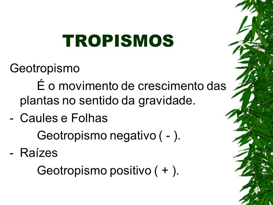 TROPISMOS Geotropismo É o movimento de crescimento das plantas no sentido da gravidade. - Caules e Folhas Geotropismo negativo ( - ). -Raízes Geotropi