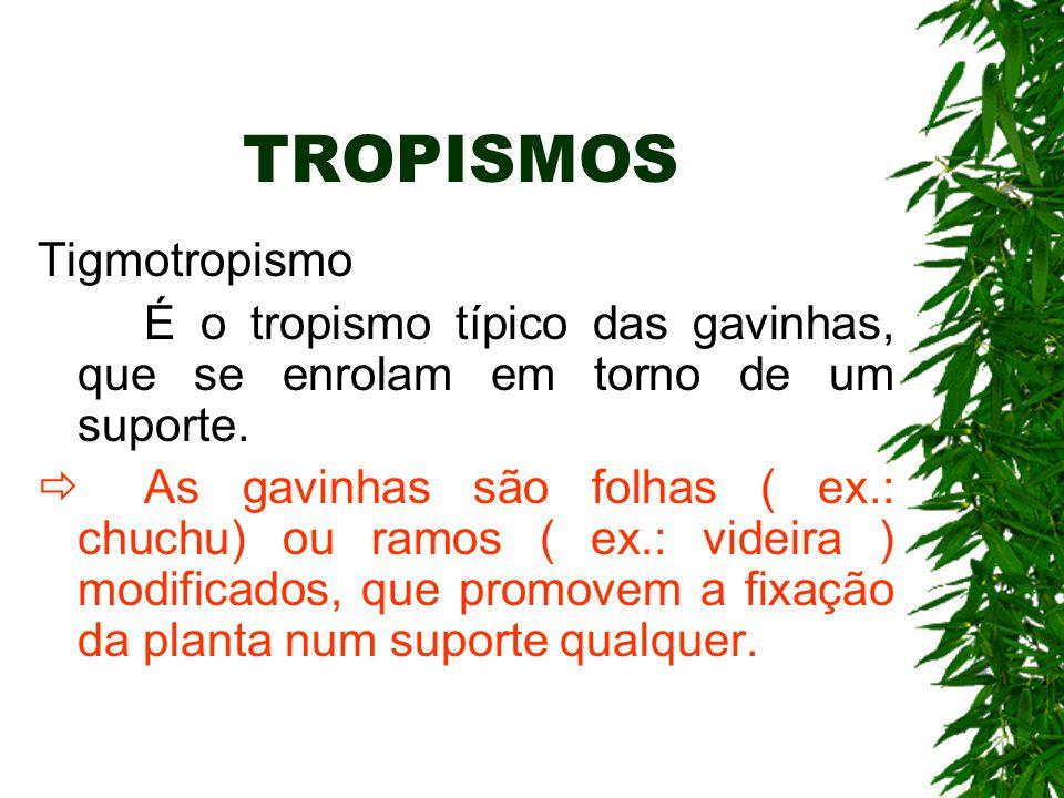 TROPISMOS Tigmotropismo É o tropismo típico das gavinhas, que se enrolam em torno de um suporte.  As gavinhas são folhas ( ex.: chuchu) ou ramos ( ex