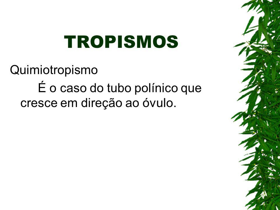 TROPISMOS Quimiotropismo É o caso do tubo polínico que cresce em direção ao óvulo.