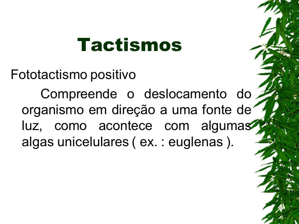 Tactismos Fototactismo positivo Compreende o deslocamento do organismo em direção a uma fonte de luz, como acontece com algumas algas unicelulares ( ex.