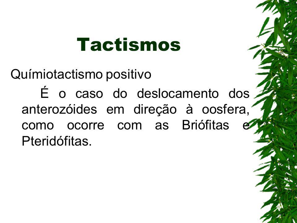 Tactismos Químiotactismo positivo É o caso do deslocamento dos anterozóides em direção à oosfera, como ocorre com as Briófitas e Pteridófitas.