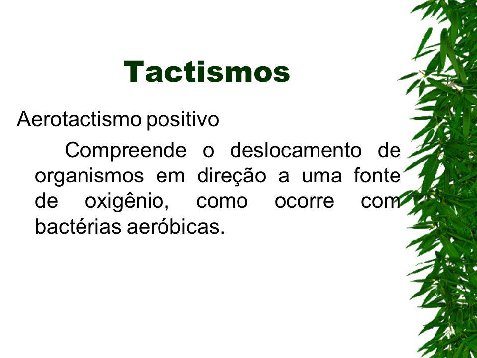 Tactismos Aerotactismo positivo Compreende o deslocamento de organismos em direção a uma fonte de oxigênio, como ocorre com bactérias aeróbicas.