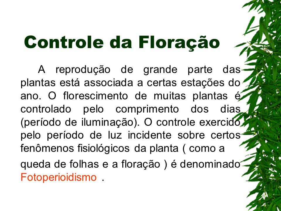 Controle da Floração A reprodução de grande parte das plantas está associada a certas estações do ano. O florescimento de muitas plantas é controlado