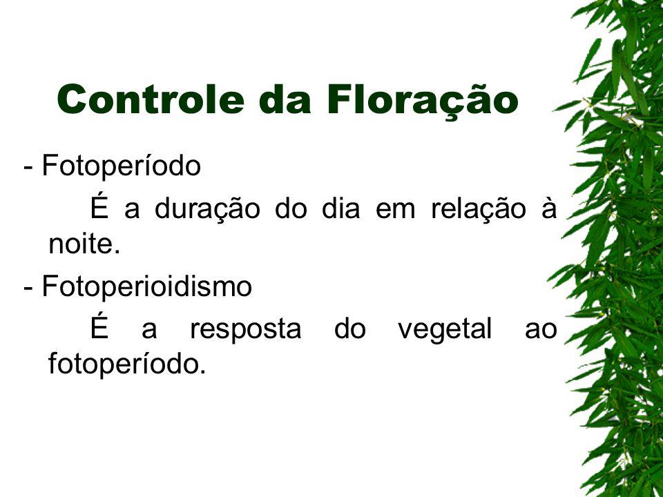 Controle da Floração - Fotoperíodo É a duração do dia em relação à noite. - Fotoperioidismo É a resposta do vegetal ao fotoperíodo.